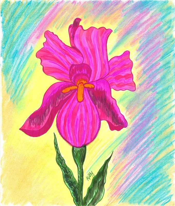 Pink Iris | kittysartfortheheart