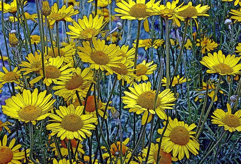 Flowers | Website of WILLIAM ANTHON...