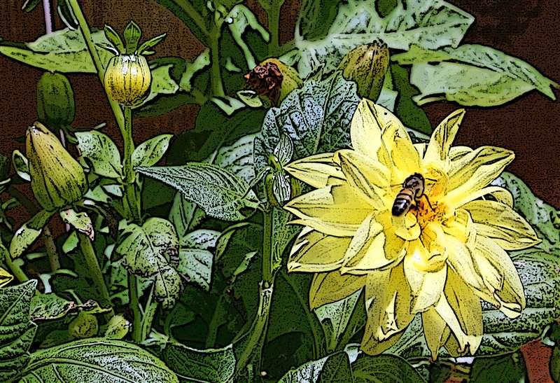 Bee on Flower | Website of WILLIAM ANTHON...
