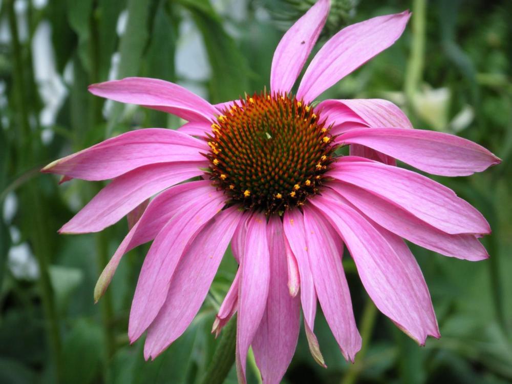 Floral-01 | Sharon (Art & Photograph)