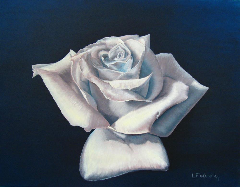 White Rose On Blue |