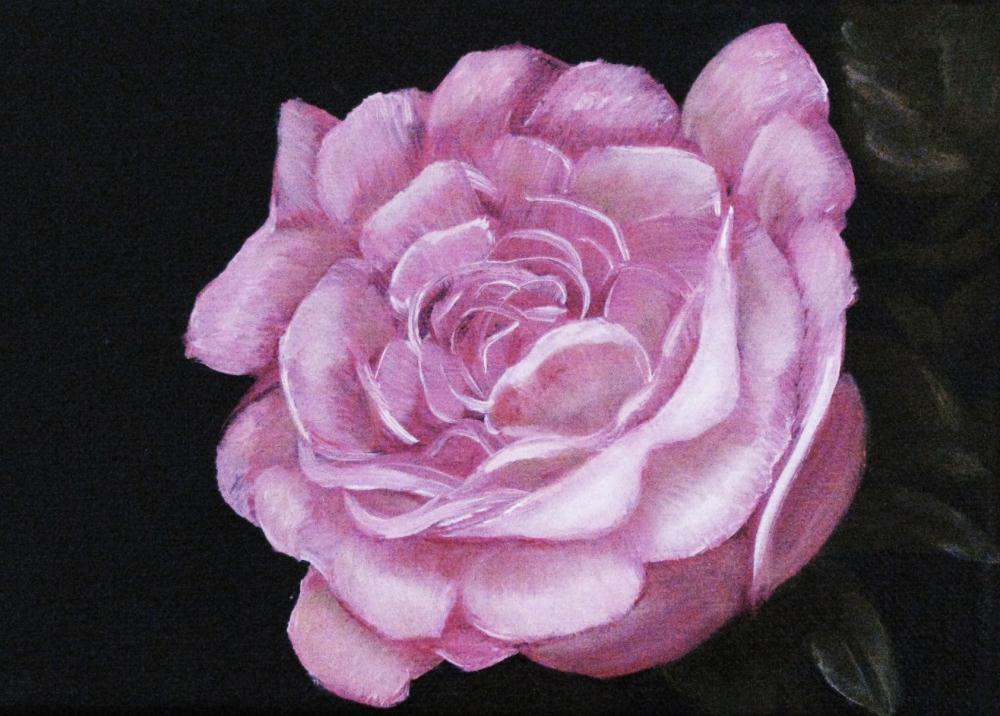 Rose, pink |