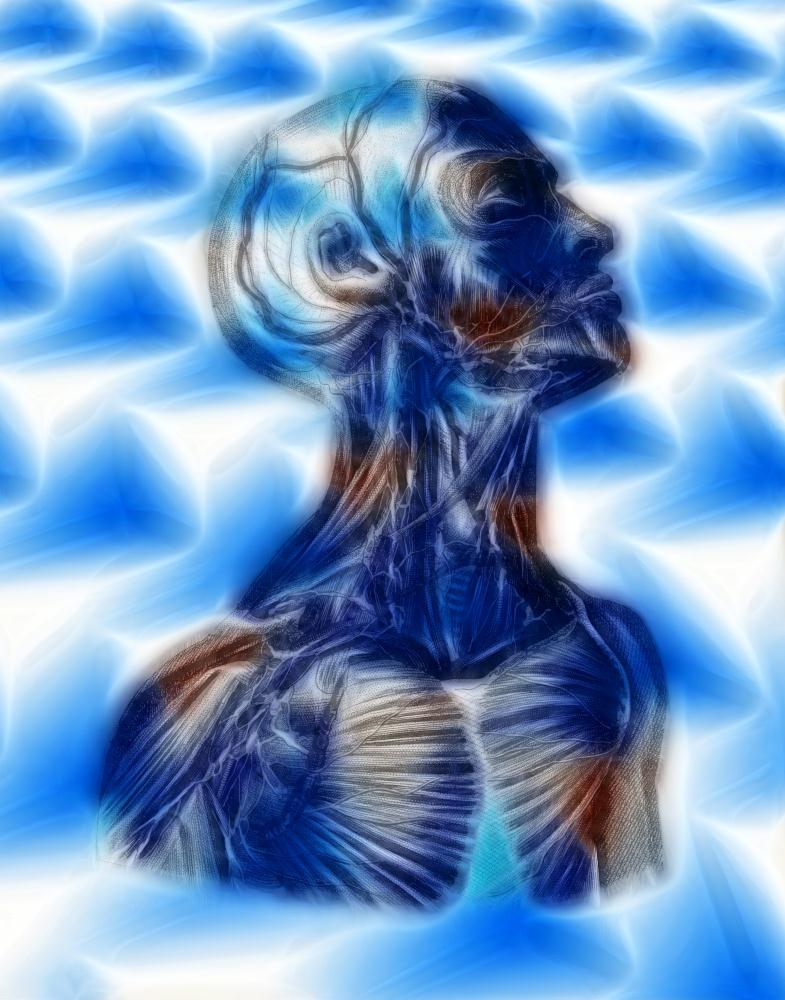Anatomical Blue Beneath t... | Antique By Design