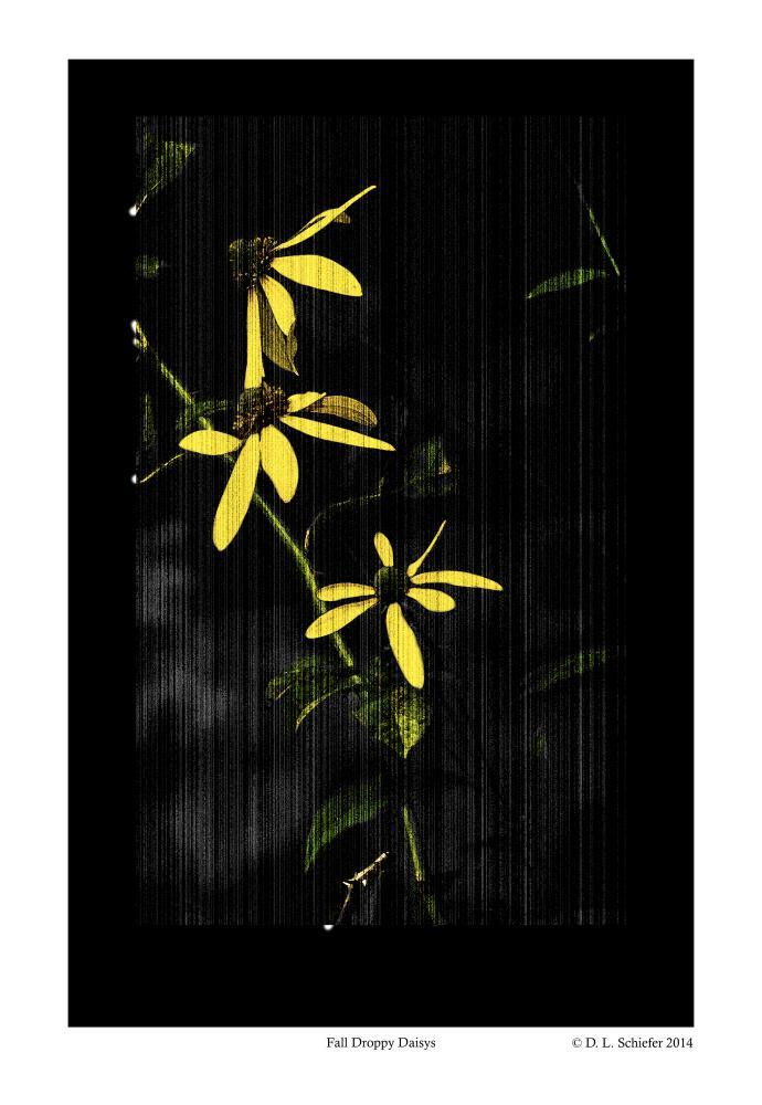Fall Droopy Daisys | Doug's Art & Photography