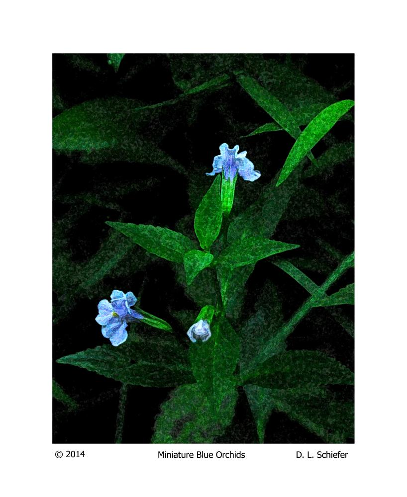 Miniature Blue Orchids | Doug's Art & Photography
