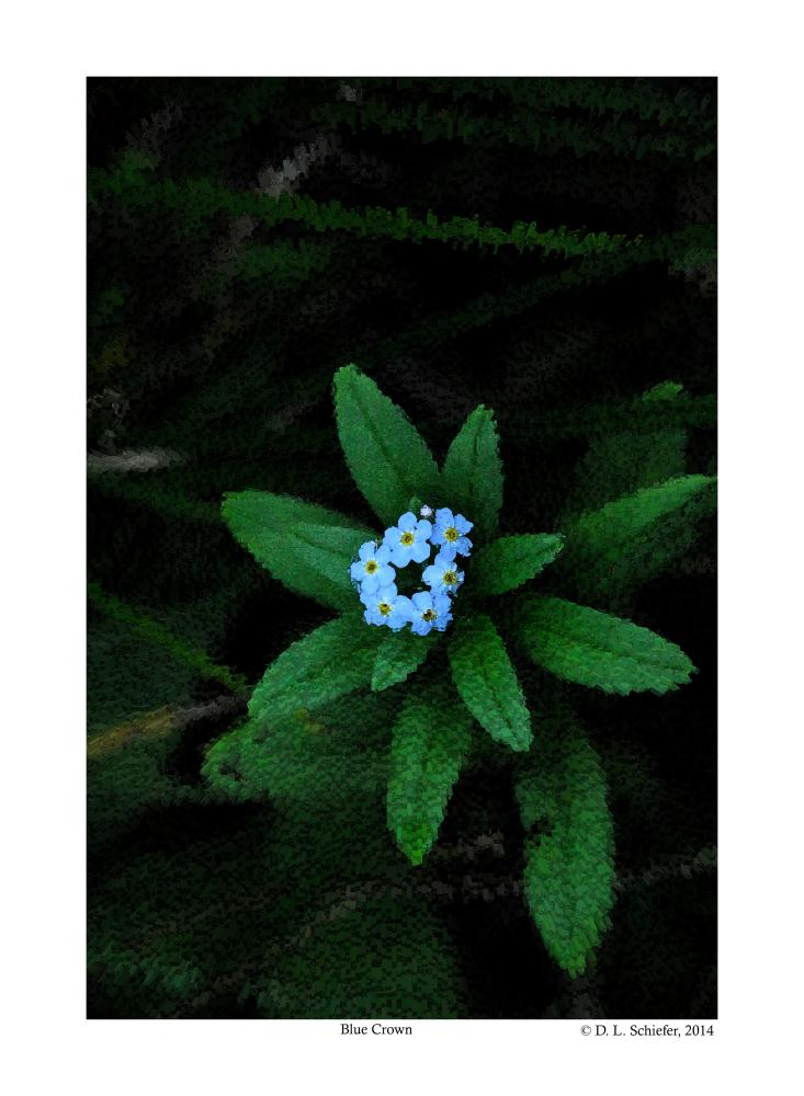 Small Crown of Blue Wildf... | Doug's Art & Photography