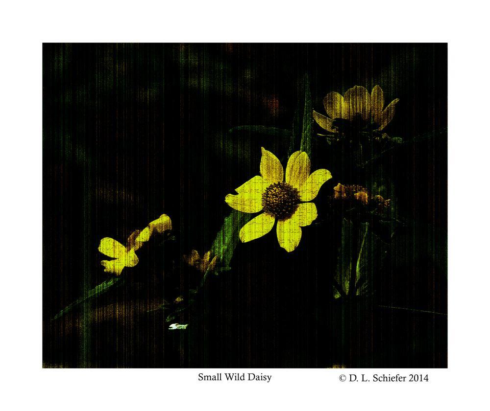 Fall Daisy | Doug's Art & Photography