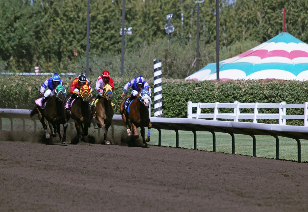 Horse Race Home Stretch   Photos from Blue Steer St...