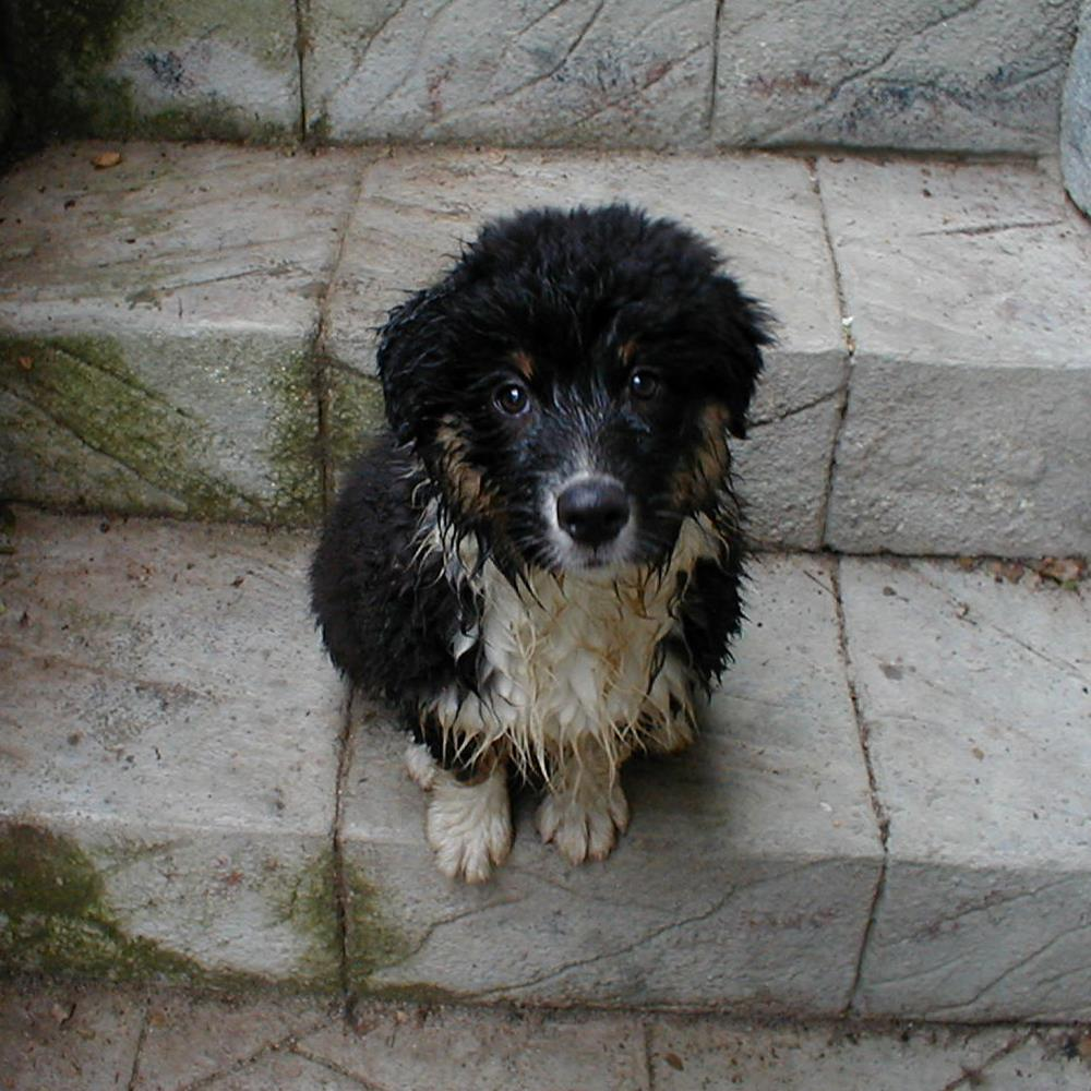 Gypsy the Orphan Puppy | Photos from Blue Steer St...