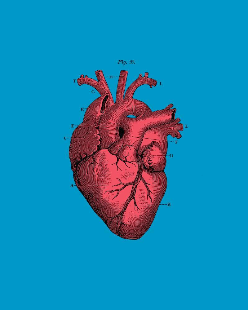Vintage Anatomical Heart ... | Digital Crafts
