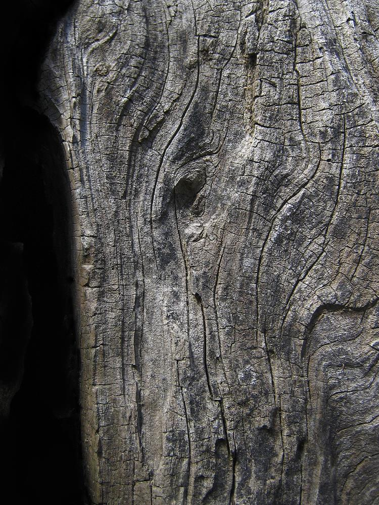 Elephant Bark | Digital Crafts