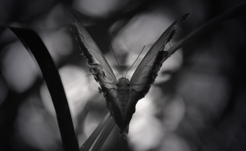 Butterfly | Photos by Pinta