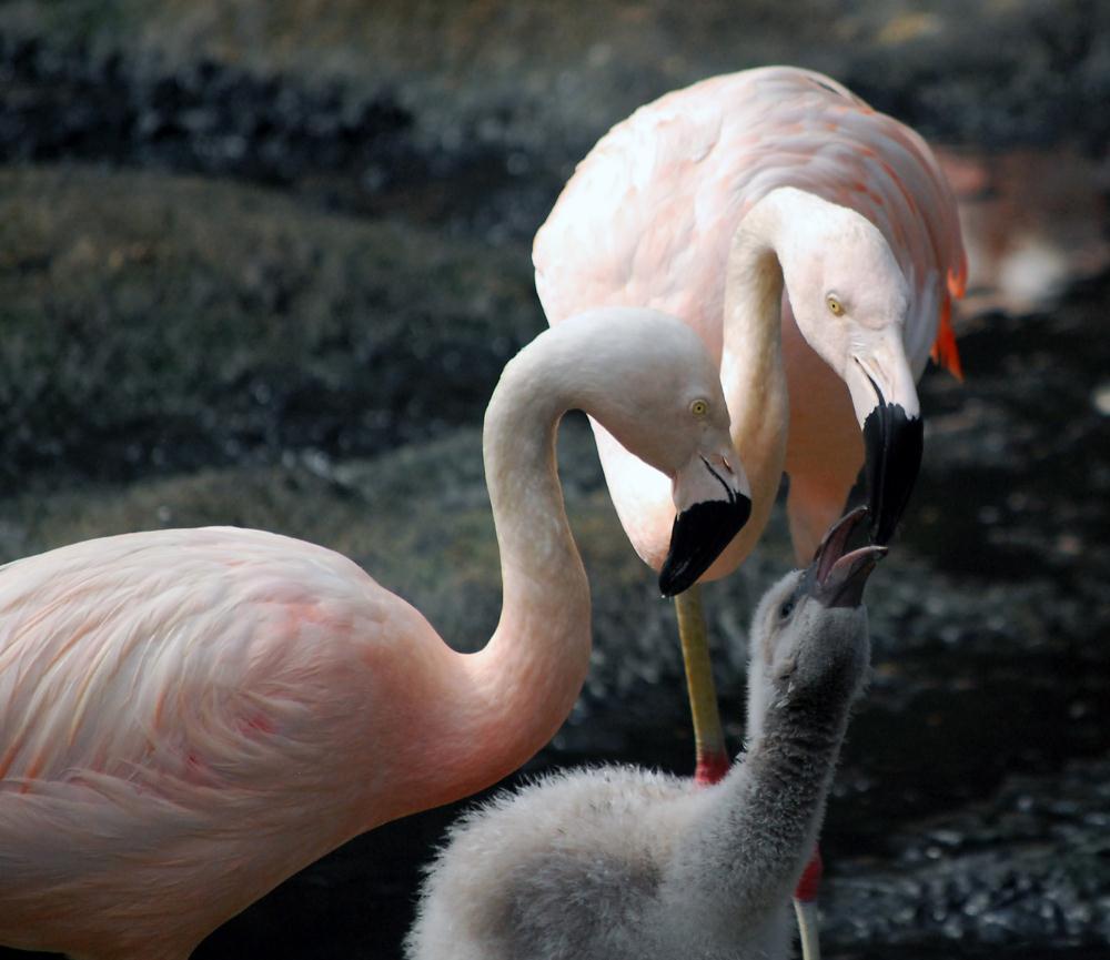 Flamingo Family | Photos by Pinta