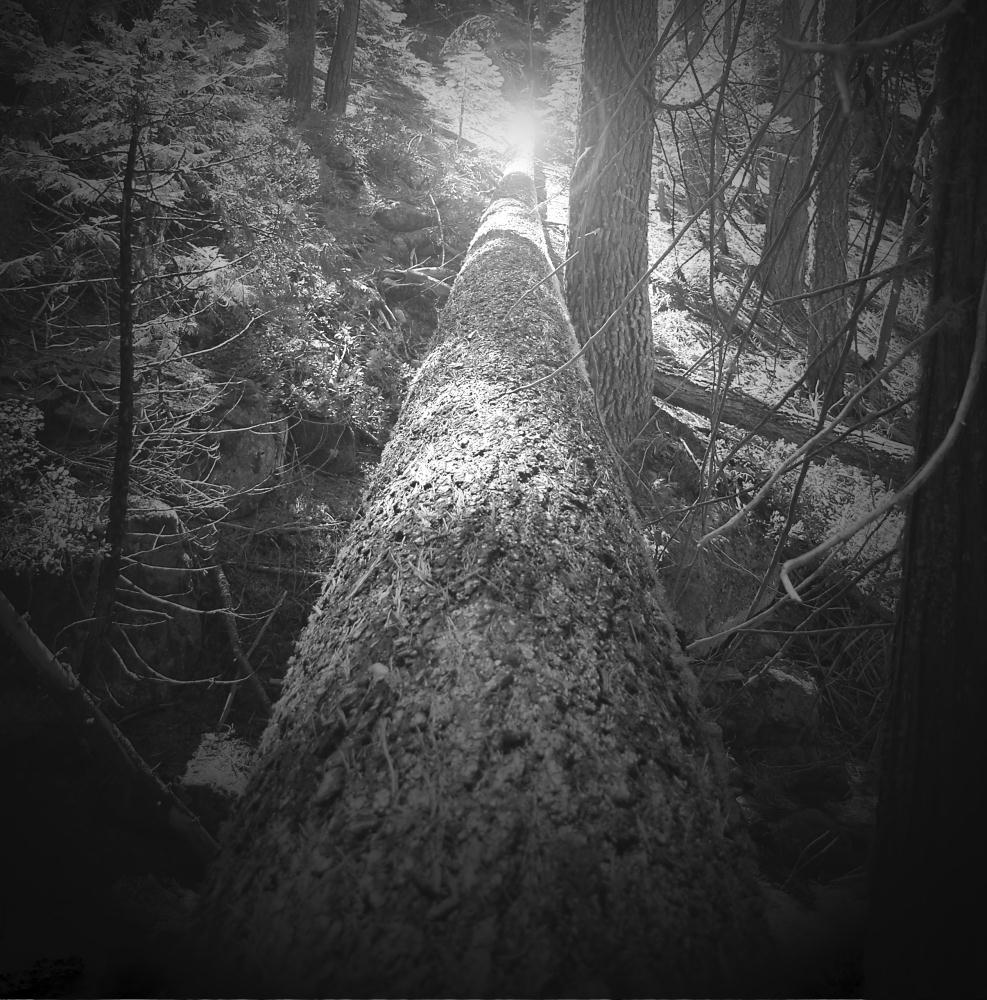 Tree Bridge | Photos by Pinta