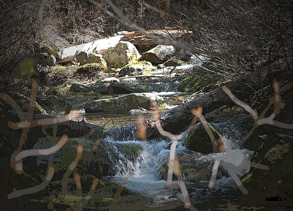 The Ravine | Photos by Pinta