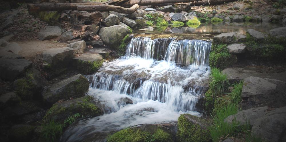 Fern Spring | Photos by Pinta