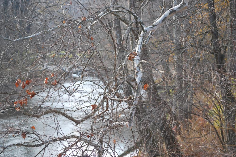 Fall Turning to Winter | Photos by Pinta