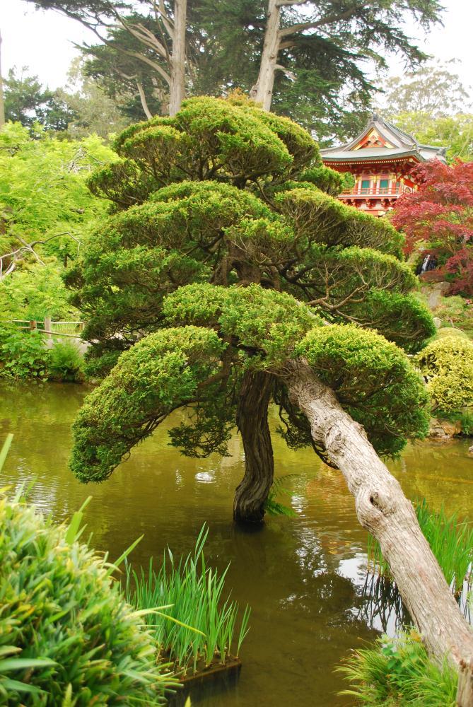 Japanese Tea Garden | Photos by Pinta