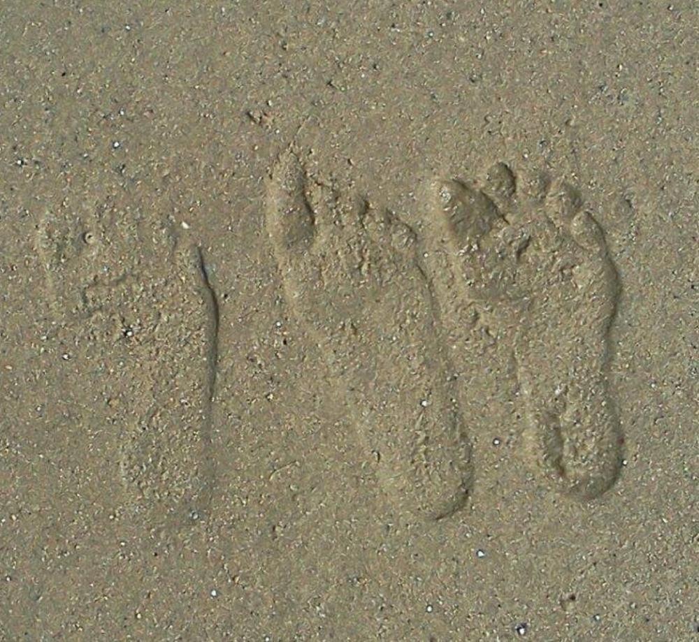 My Family Footprints   Bootlegger Creations