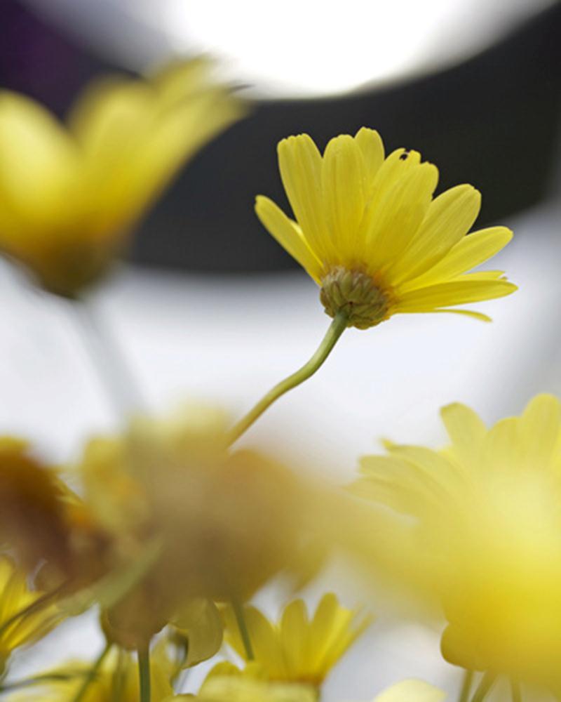 yellowflower2011hires |