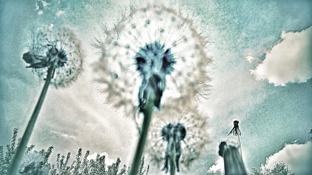 Blue Sky Dandelions  | Paint and Pixels