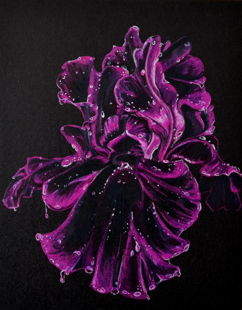 Purple iris | Kathleen Fiorito Art