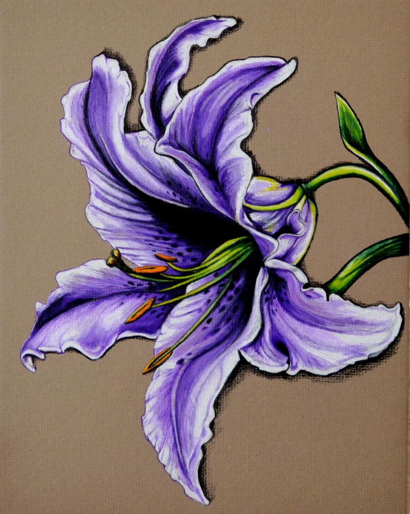 Purple star gazer lily | Kathleen Fiorito Art