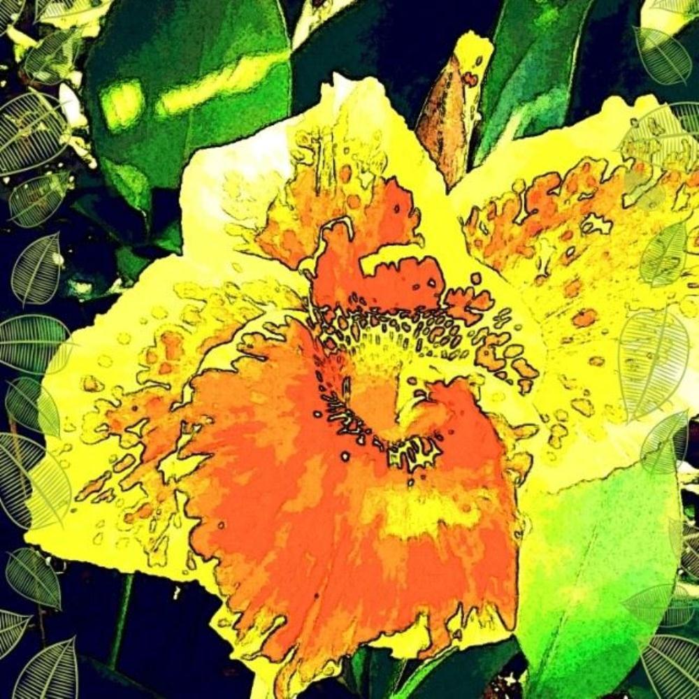 bruceflower |
