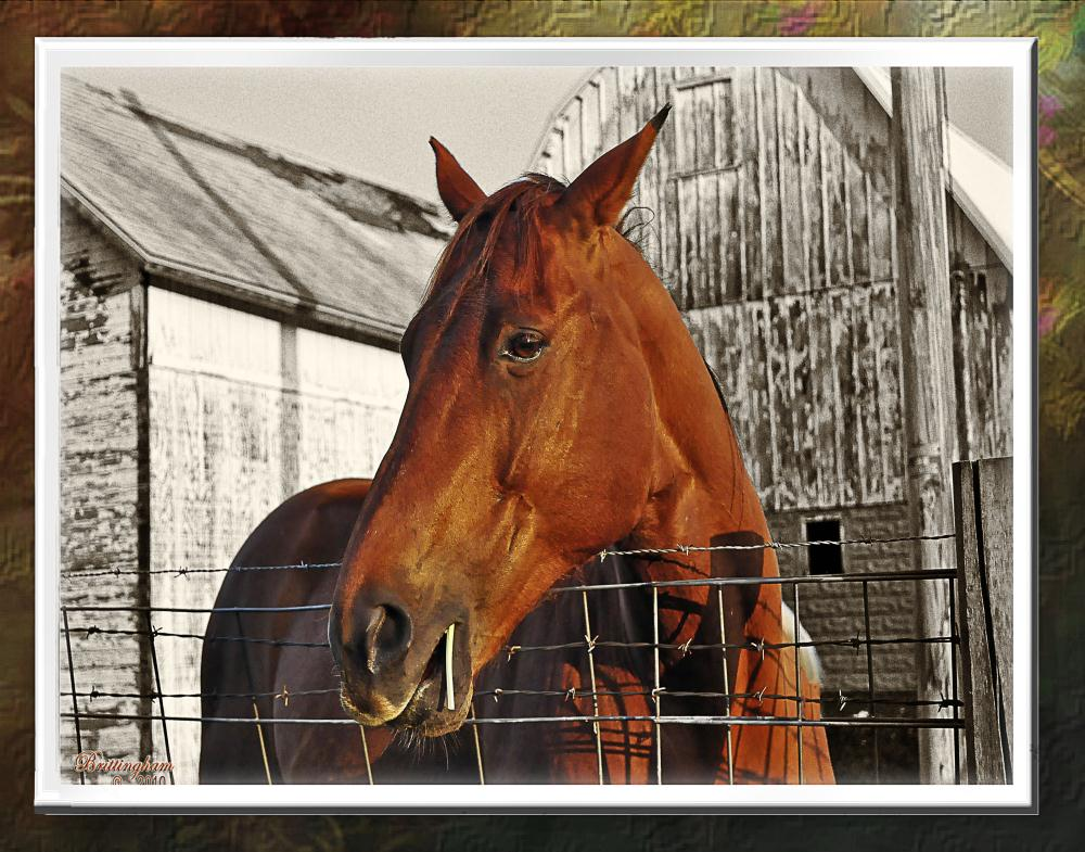 A Horse and His Barn   EarthPortraits by Brittin...