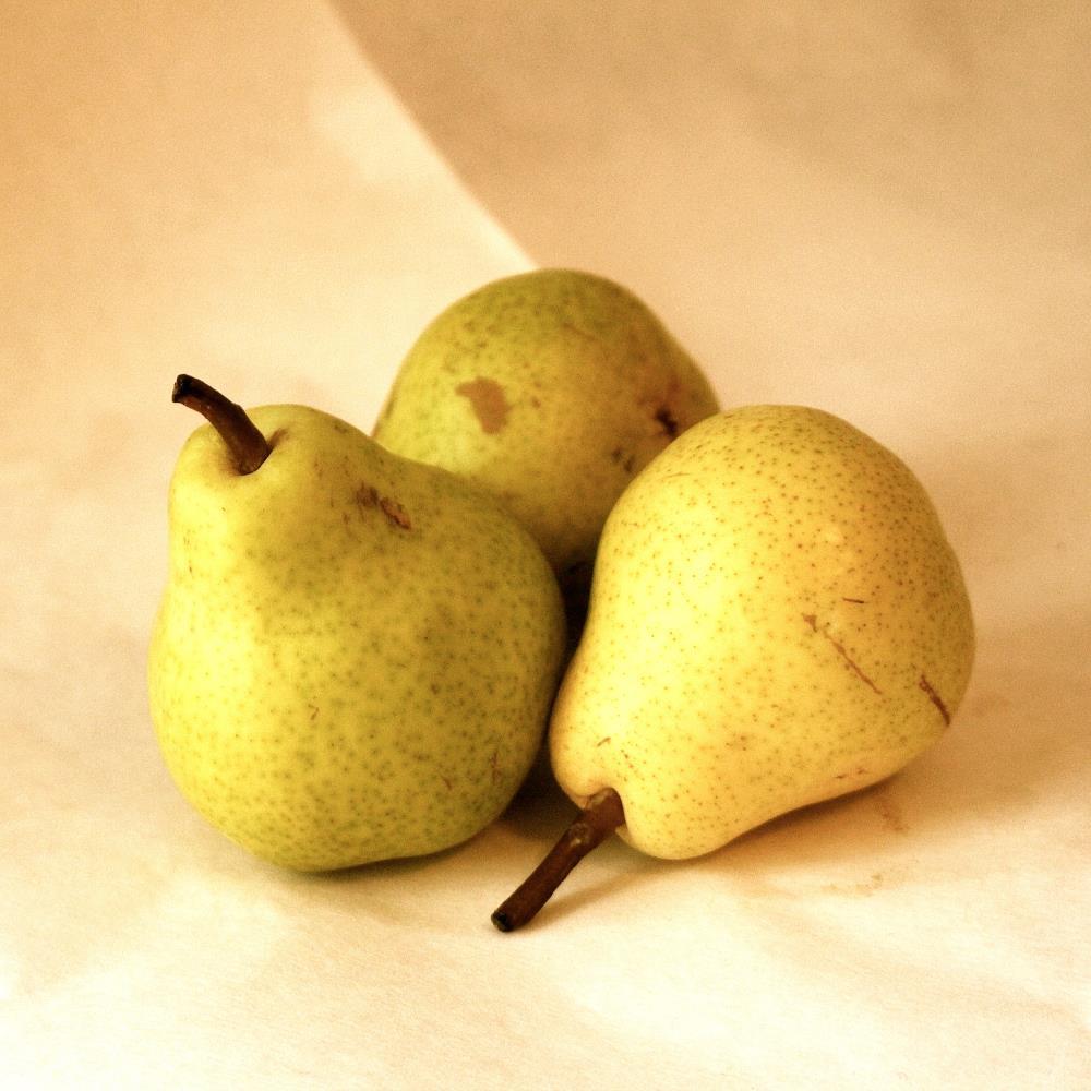 3 Pears | Donna Starnes Creative