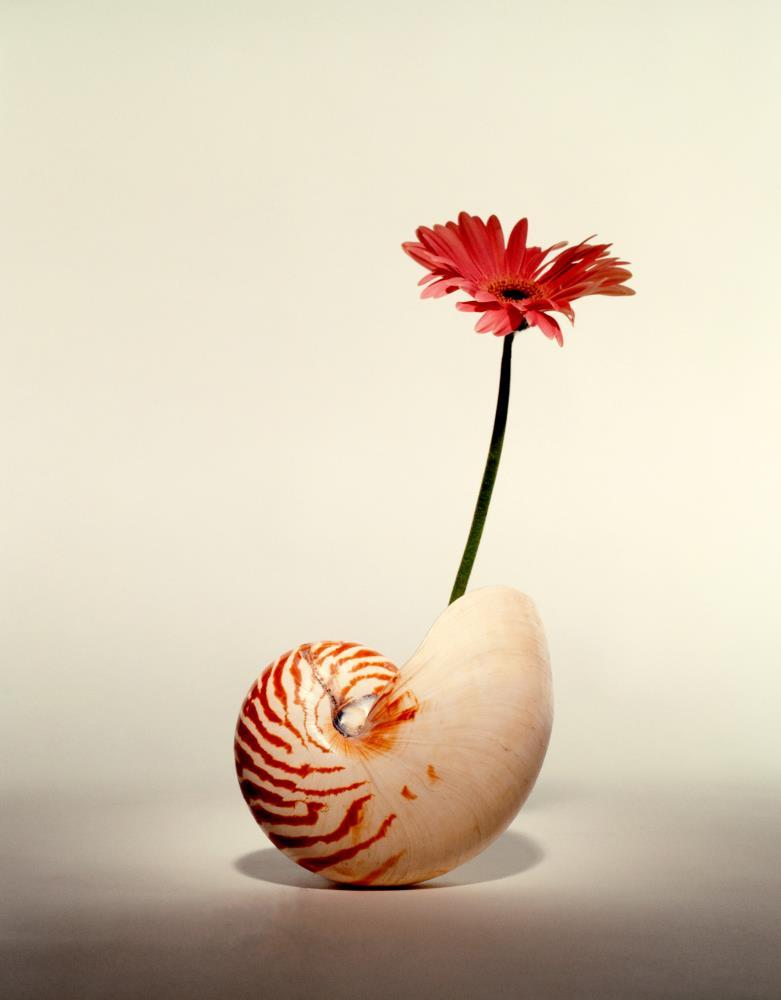 Nature's Beauty | K DucoteSchimmel Art & Ph...