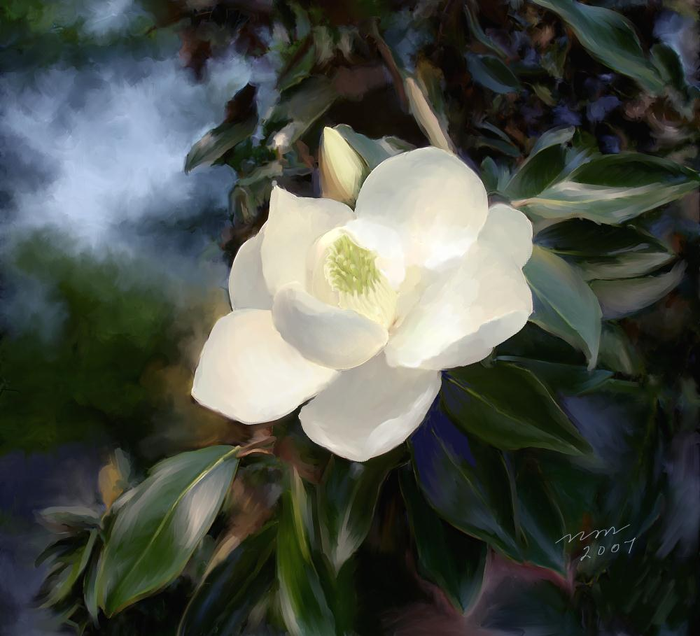 MAGNOLIA BLOSSOM | Painted Expressions by Ni...