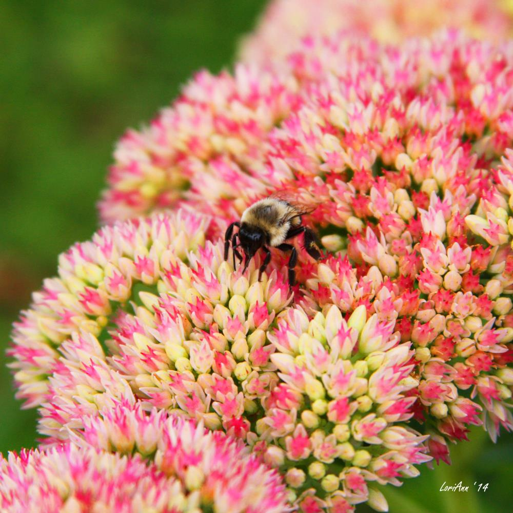 Busy Little Bee | LoriAnn's Photography & A...