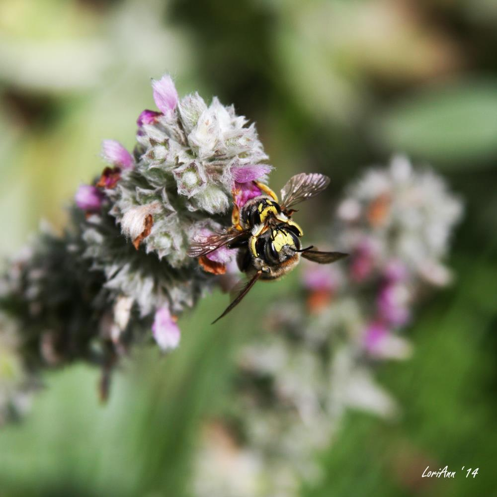 Mating of the Insects 1 | LoriAnn's Photography & A...