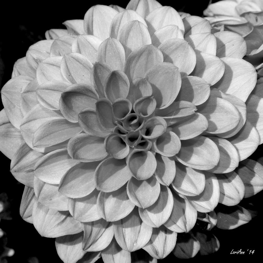 Petal Pattern | LoriAnn's Photography & A...