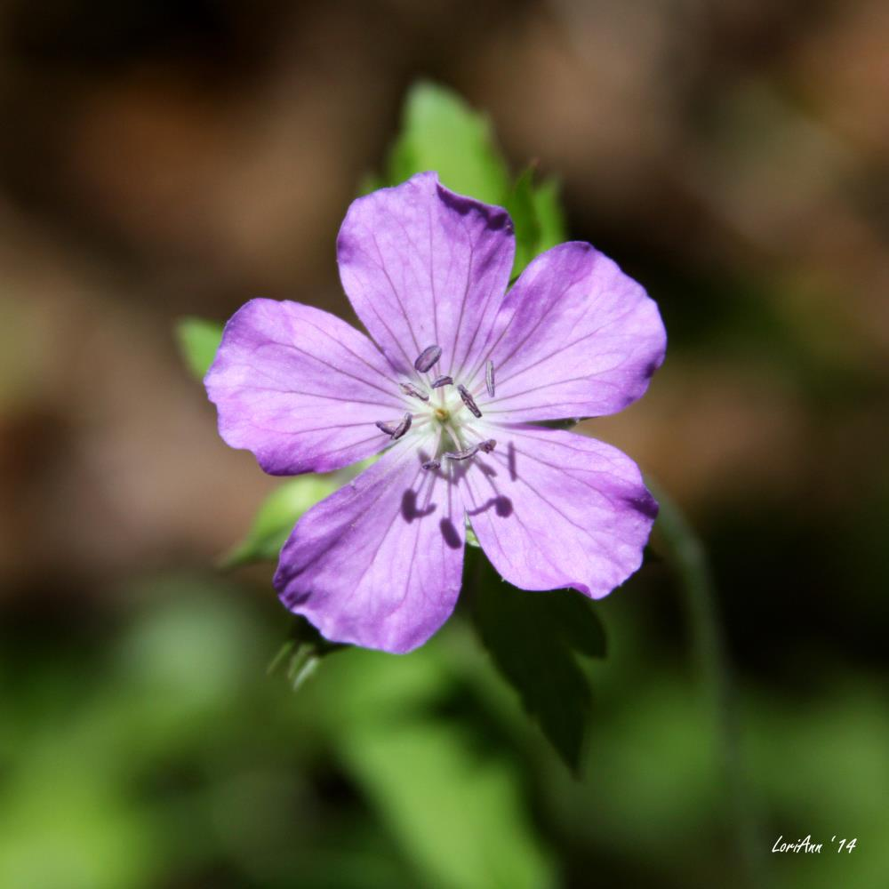 Solo Purple | LoriAnn's Photography & A...