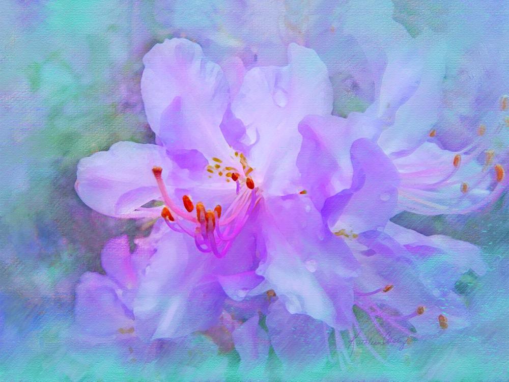 Lavender Azalea   Expressions of Life