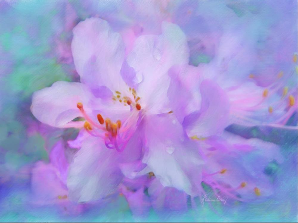 Lavender Azaleas in Sprin... | Expressions of Life