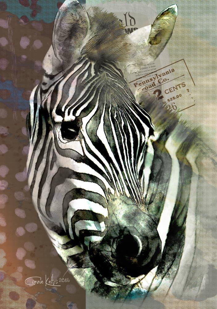 Tanzania Zebra    C. Kelts Graphic Design