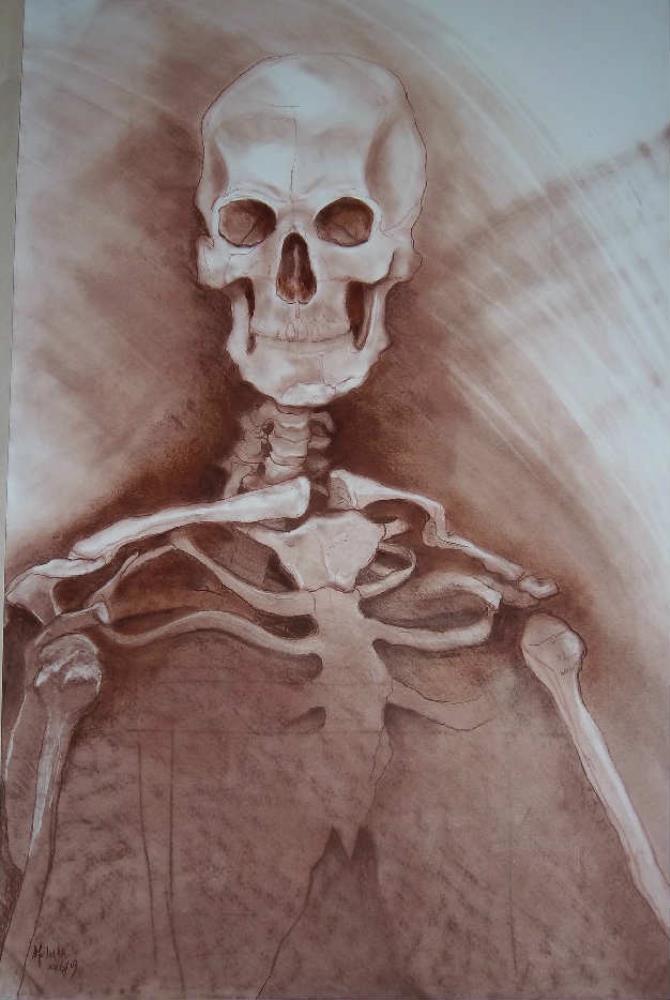Skeletal Study I |