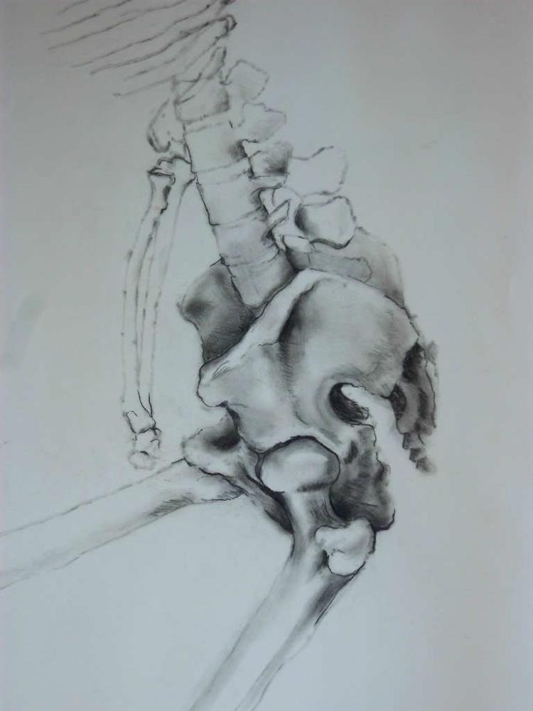 Skeletal Study III |