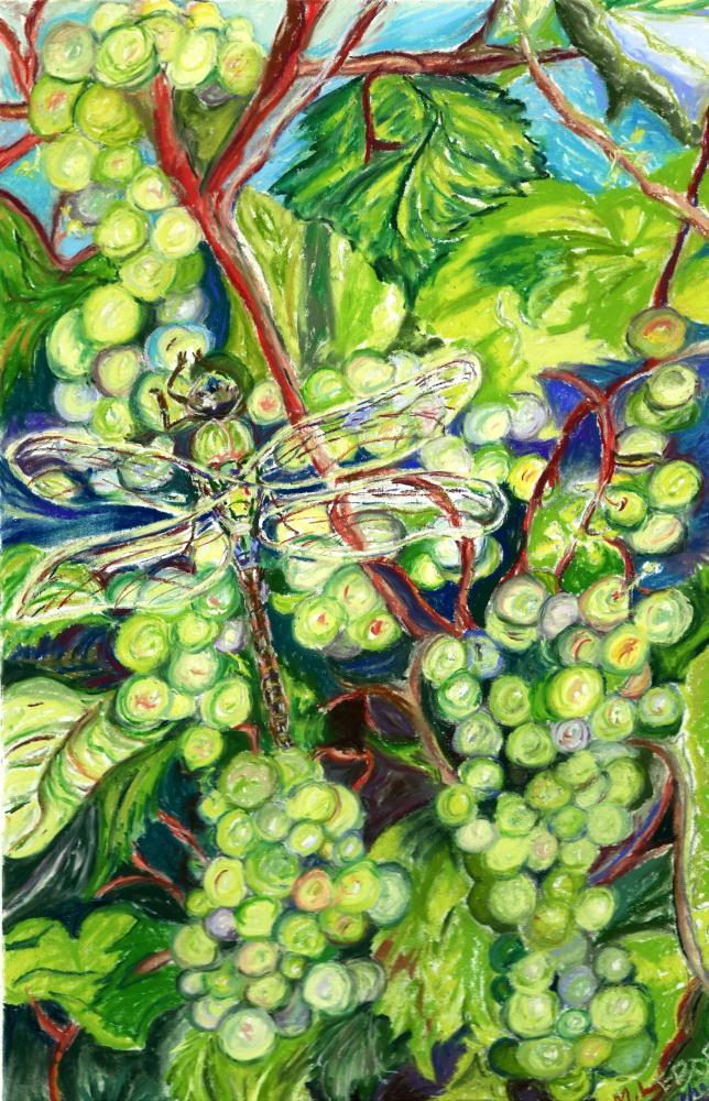 Vineyard Dragonfly | Watercolours