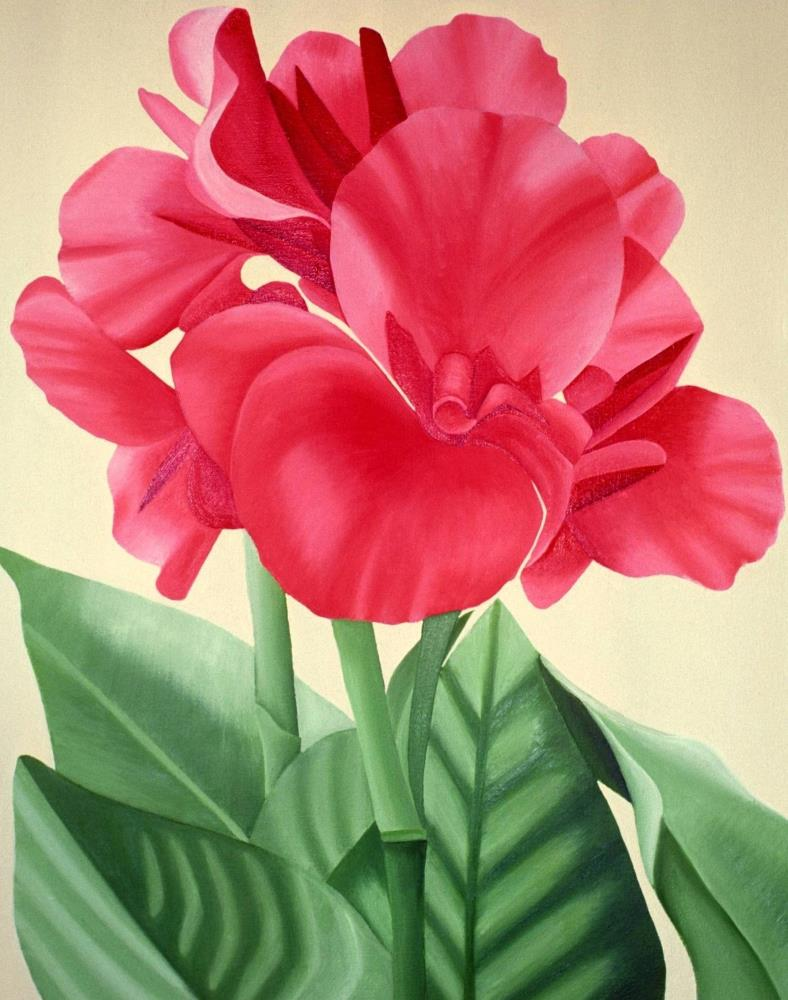 Canna Lily | Gallery Renee Denise