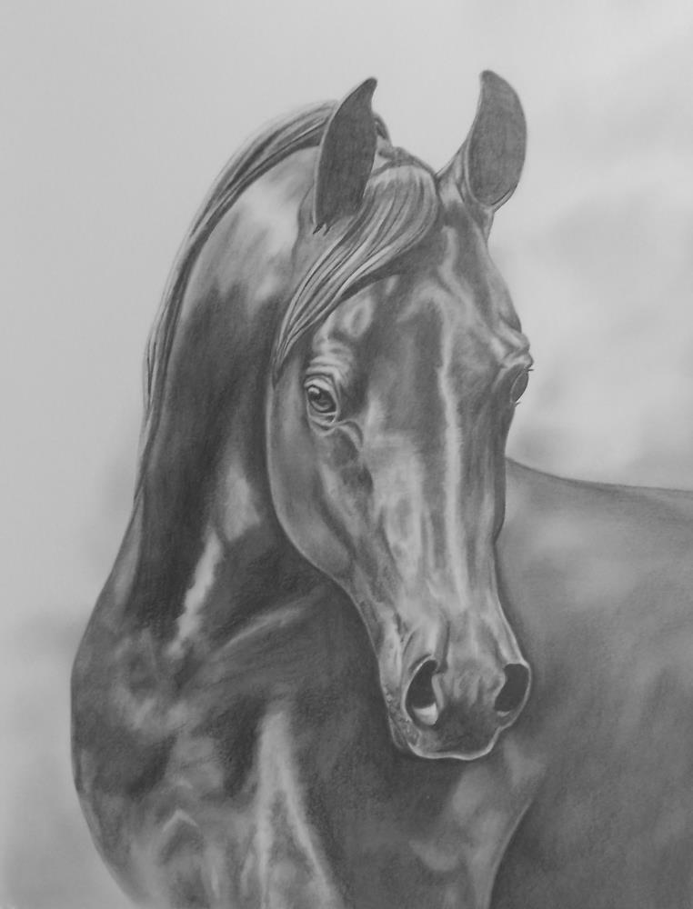 ArabianatDusk |