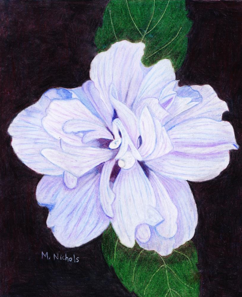 Hibiscus | Mary's Prints