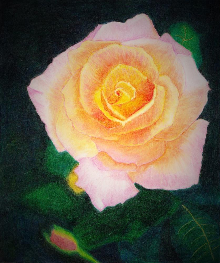 Summer Splendor | Mary's Prints