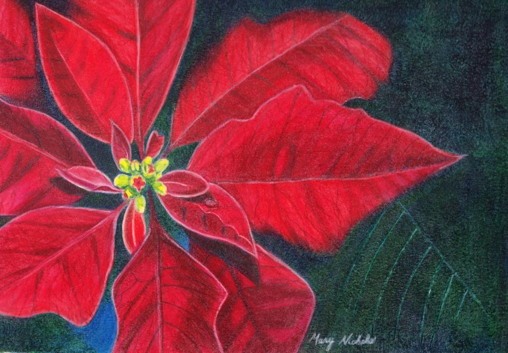 Poinsettia | Mary's Prints