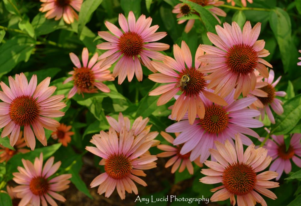 PinkDaisys | Amy Lucid Photography
