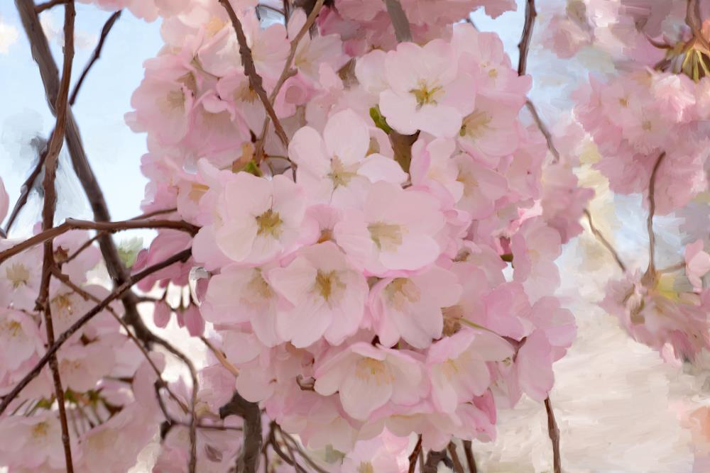CherryBlossompainting | Julie Atlas Photography
