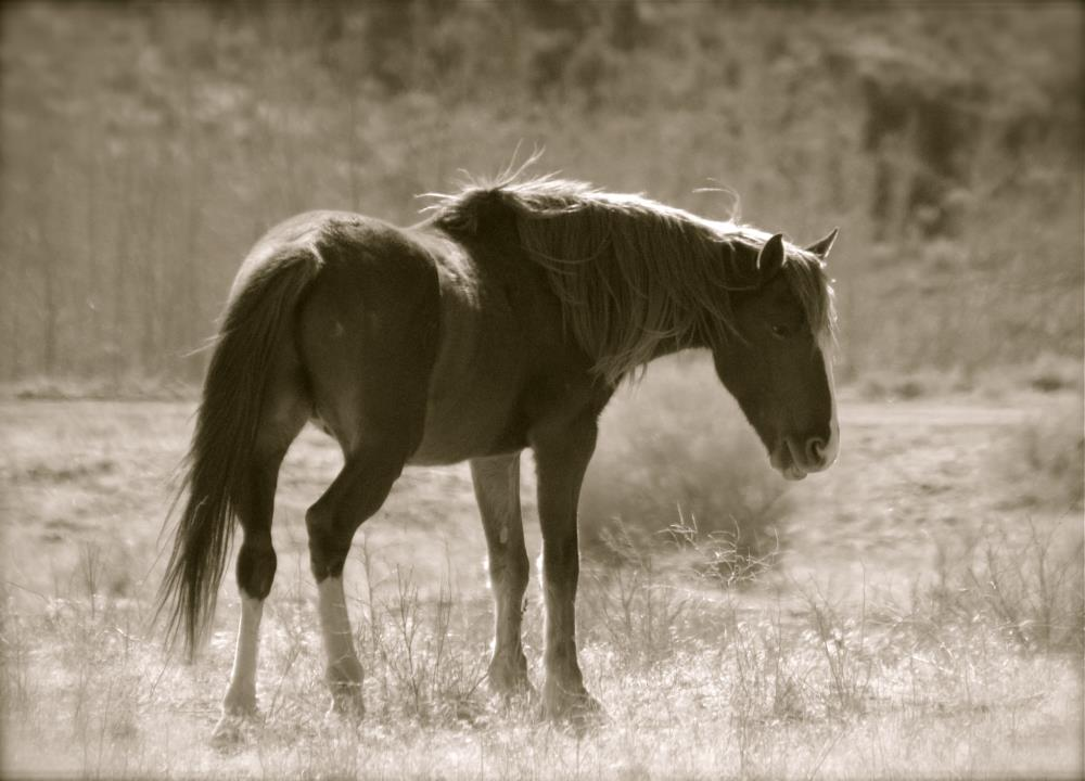 Lazy Stallion | My Art's Desire